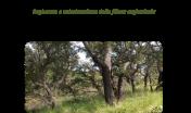 Workshop_Sughericoltura___CREA_Foreste_e_Legno__Rende___12.02