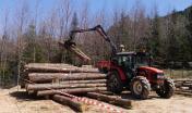 lavori forestali
