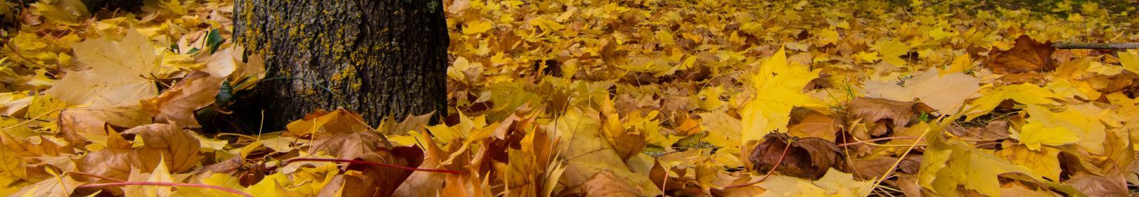 tappeto di foglie in un parco a Gairo (foto C.Mascia)